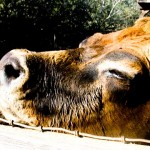 Avila Farm 6