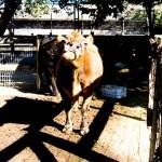 Avila Farm 7