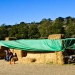 Avila Farm 8