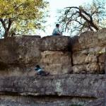 Zilker Park Rock