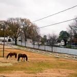 Graceland Horses Memphis