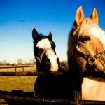 Horses Brookwood