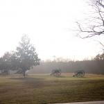 Canons Chickamauga
