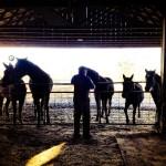 Horses and Steve