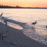 Birds Sanibel Island