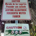 Caution Alligators Sanibel Island