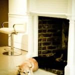 Dog Sleeping in Fireplace New Orleans