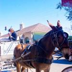 Mule New Orleans