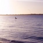 Pelican Sanibel Island