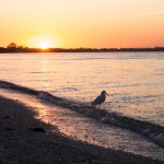 Sunset Bird Sanibel Island