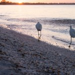 We weren't the only lovebirds on Sanibel Island