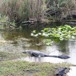 Anhinga Trail Everglades NP