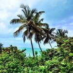 Bahai Honda State Park Florida Keys