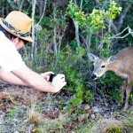 Brent and Deer FL