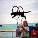 Cat Jumping Through Fire Hoops Key West