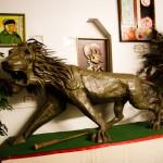 Solomons Lion