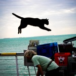 Trained House Cat Key West