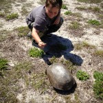 Turtle Anastasia State Park FL