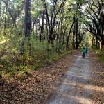 Bike Path Skidaway Island State Park GA