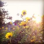 Flowers FL