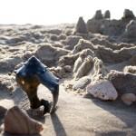 Black Seashell Cape Hatteras National Seashore