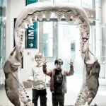 The Museum of Natural History – Washington DC