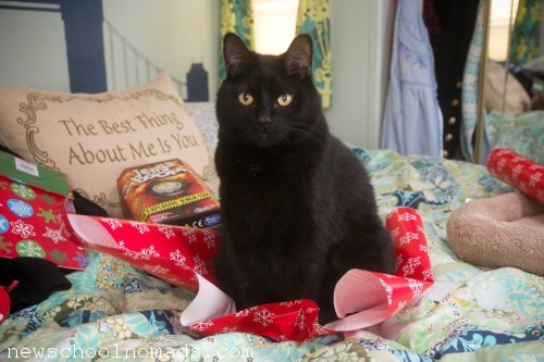 Cat on Wrapping Paper