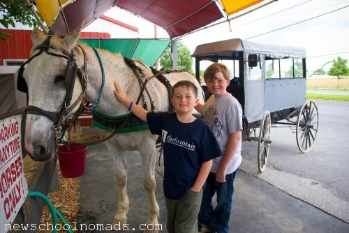 Amish Buggy Ride PA