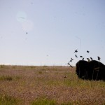 Birds and Bison Antelope Island UT