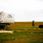 Camping and Bison Antelope Island State Park UT