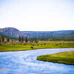 River Yellowstone NP