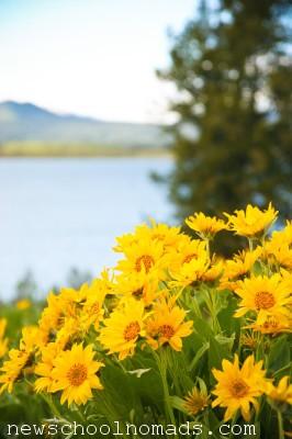Wild Flowers Grand Tetons Wyoming