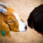 Goat Kiss WY