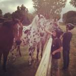 Horses IG