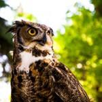 Owl WY