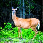 Deer Glacier NP