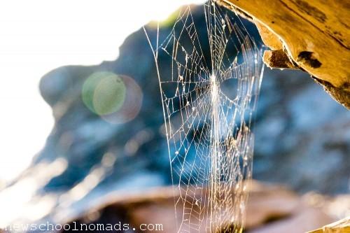 Spider Web WA