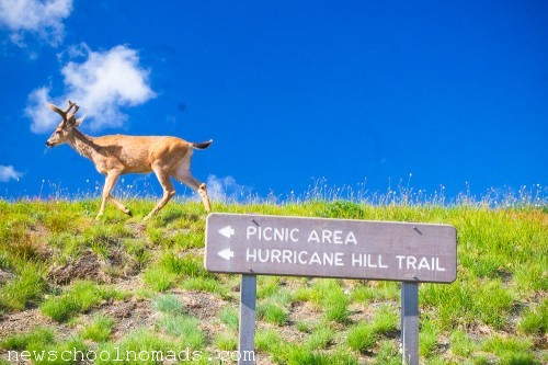 Deer and Trail Sign Olympic NP WA 1