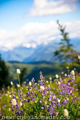 Wild Flowers Olympic National Park WA 1