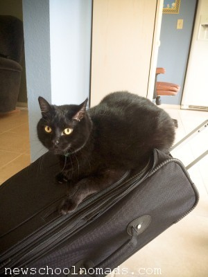 Cat on Suitcase FL