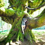Cool Tree Olympic Peninsula WA