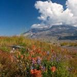 Flowers Mt St Helens WA
