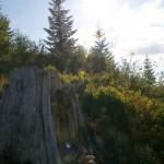 Log Mt St Helens WA