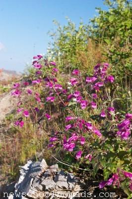 Summer Flowers Mt St Helens WA