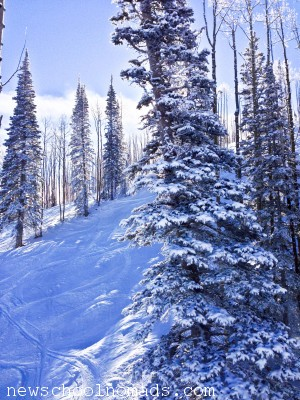 Snow Trees Canyons Resort Park City UT