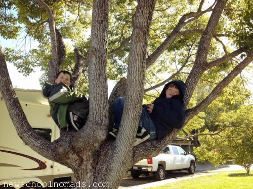 Boys in Tree Houston