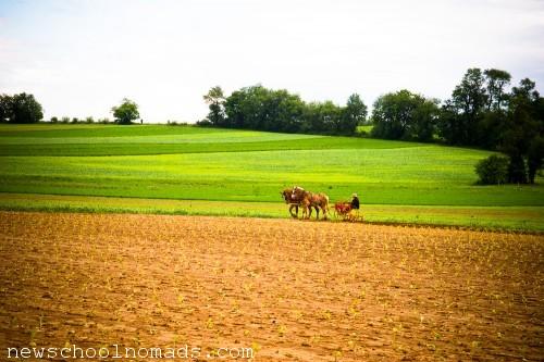 Amish Field PA