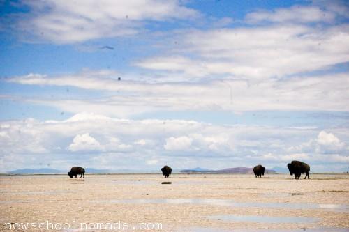Visiting Antelope Island State Park UT