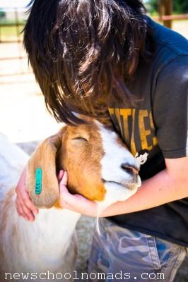 Sweet Goat WY