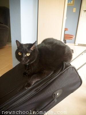 Cat on Suitcase FL